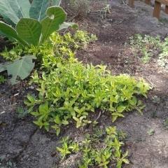 PL-Garden-4